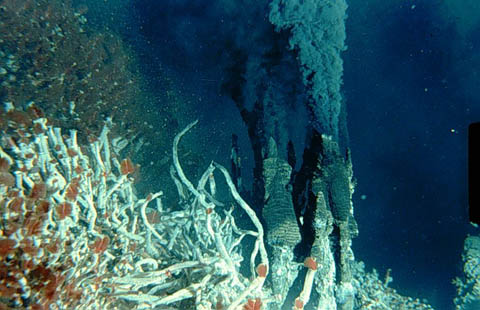 a study on hydrothermal vents and the changes in ocean temperature Home » extreme life » researchers discover deepest known high-temperature hydrothermal vents in pacific ocean tags: hydrothermal vents researchers discover deepest known high-temperature hydrothermal vents in pacific ocean comet provides rare chance to study solar system's origins.