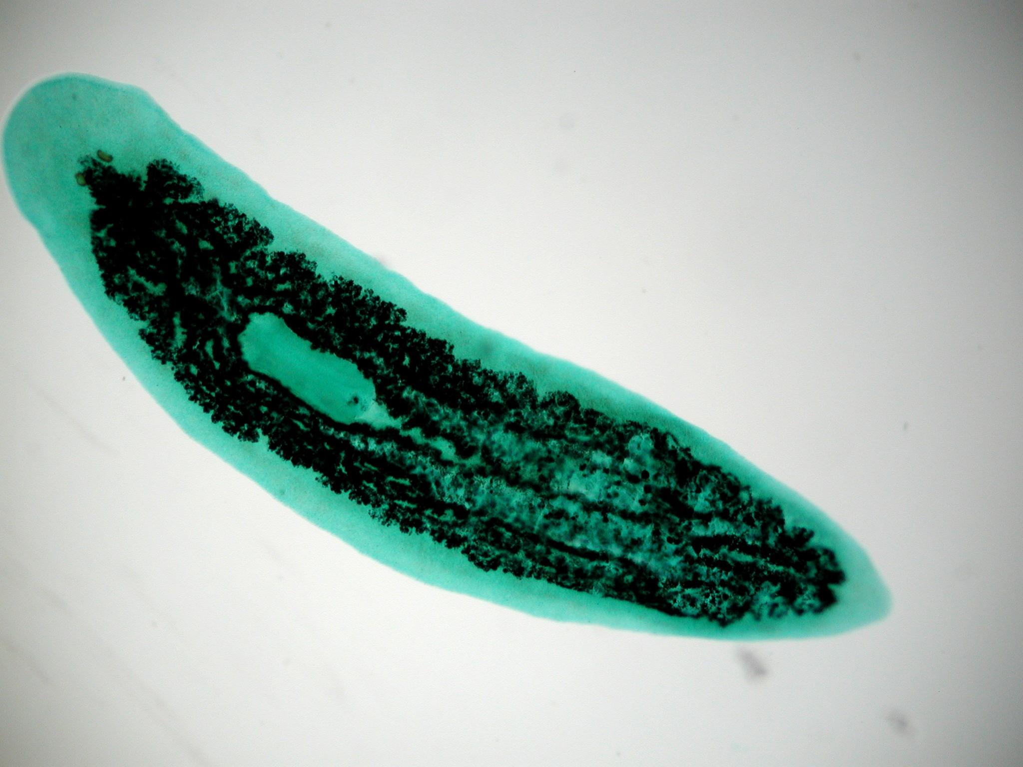 Cnidaria And Platyhemlinthes